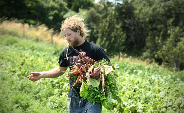 Vsaka država bo morala obseg površin za ekološko kmetijstvo povečati na 25 odstotkov. V Sloveniji je ta delež desetodstoten. FOTO: Jure Eržen