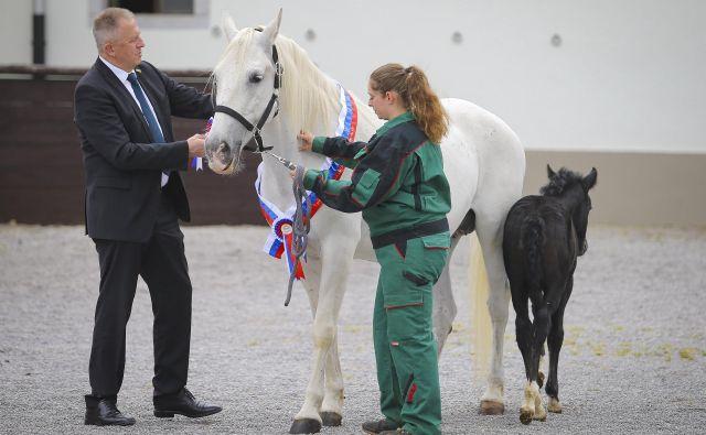 Minister Zdravko Počivalšek je kobilarno Lipica obiskal pred tednom. Vlada je v letnem načrtu za 142 konj predvidela prenos lastninske pravice z države na drugo pravno osebo. FOTO: Jože Suhadolnik/Delo