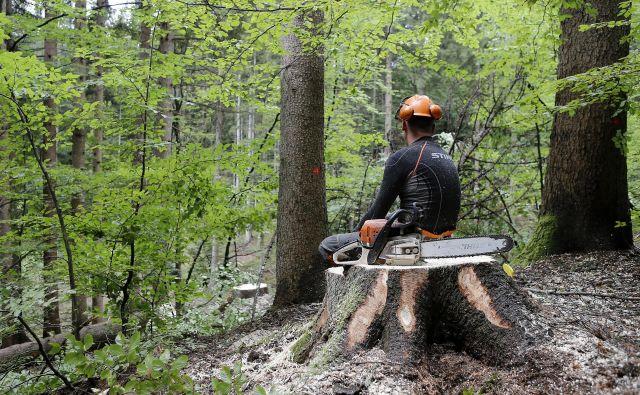 Cene del v gozdu so se še dodatno znižale z ustanovitvijo državnega podjetja SiDG. Foto Blaž Samec