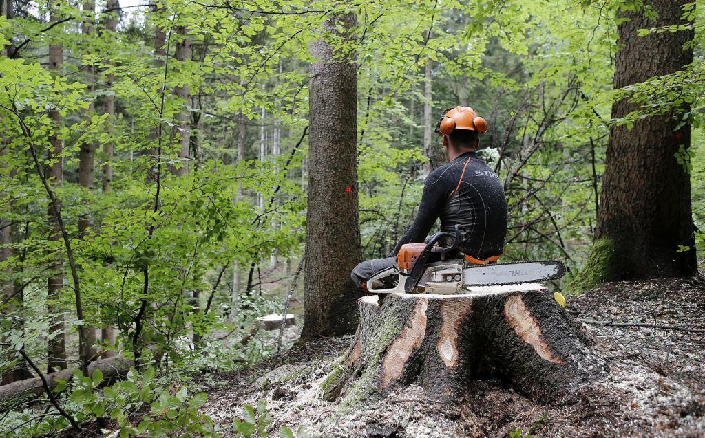 FOTO:Podcenjeno delo v gozdu