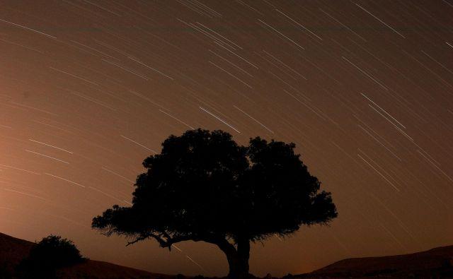 Drevo. FOTO: Amir Cohen/Reuters