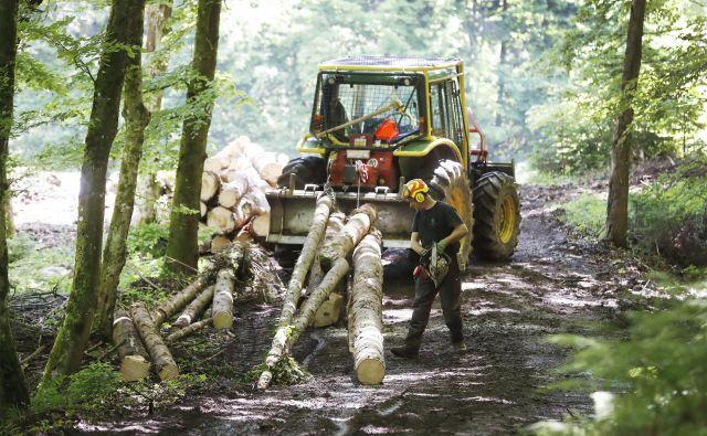 Gozdarska inšpekcija je v zadnjih petih letih na leto izvedla od 327 do 1363 prekrškovnih ukrepov, povezanih s sanitarno sečnjo.<br /> Foto Leon Vidic
