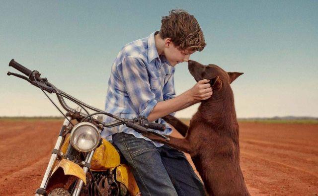 Rdeči pes Modri FOTO: TVS