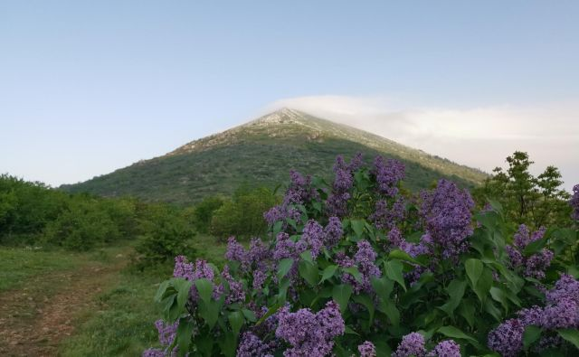 Pogled na piramido Rtanj s pobočja, kjer omamno diši divji španski bezeg. FOTO: Milena Zupanič