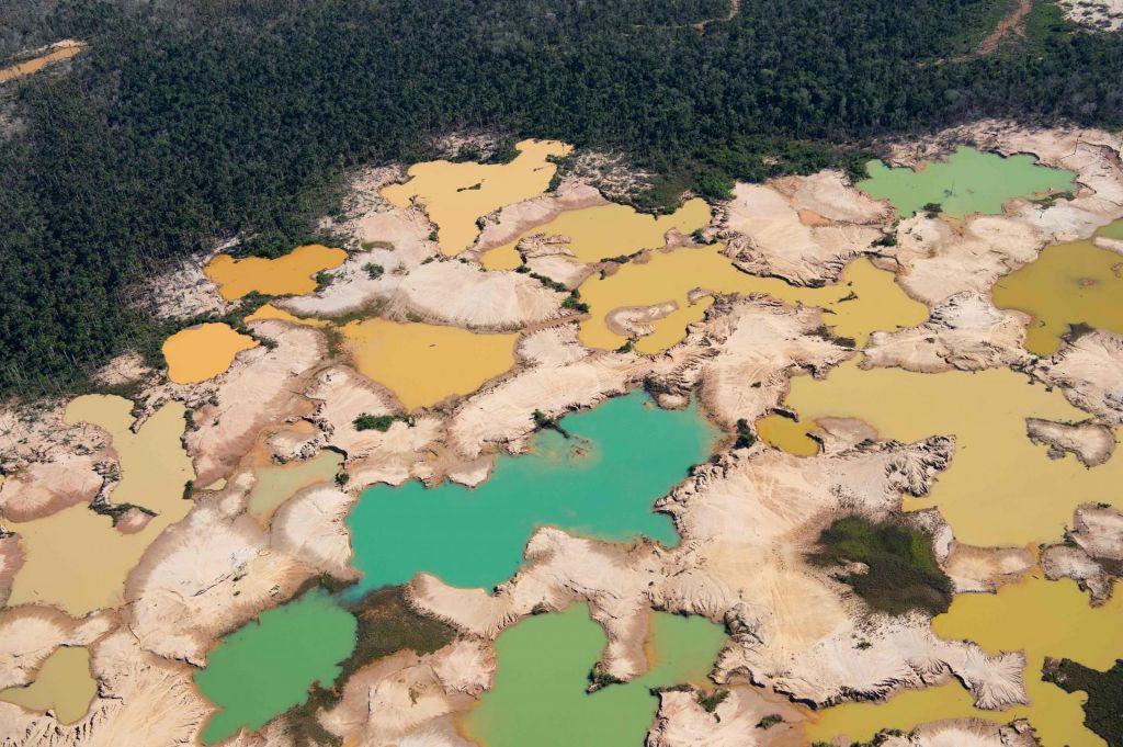 Lani je na svetu izginilo 11,9 milijona hektarov gozdov