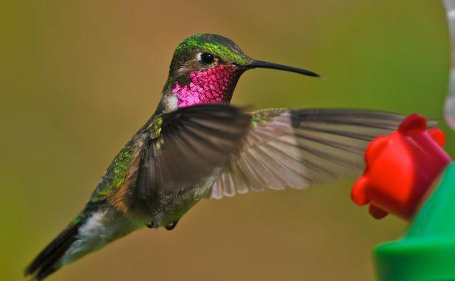 Veliko ptic se nam zdi pisanih, a kako pisane so šele same sebi.Foto Shutterstock