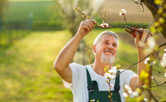 Volivci morajo ravnati tako, kot ravna umen sadjar: odstraniti morajo n neplodne veje! Foto Shutterstock