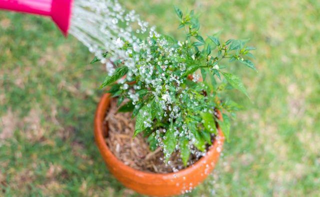 Poletja pogosto spremljajo tudi sušna obdobja, ko z zalivanjem vrta škodujemo okolju. Foto Simon Maddock/Shutterstock