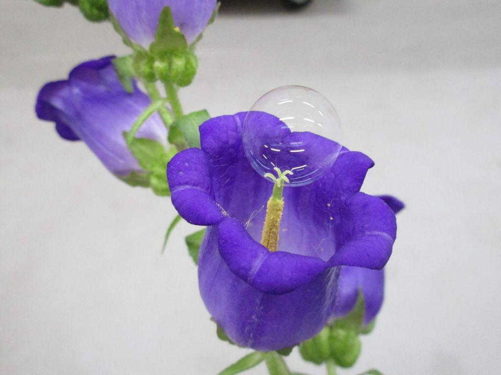 Mehurčki za opraševanje cvetov