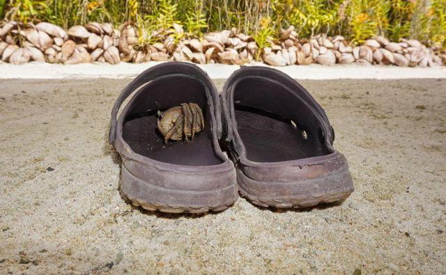 V teh kao trendi šlapah hodim po stanovanju, na dopustu si v njih namreč polomim nohte na nogah in zvijam gležnje in sem na poti iz bifeja jako nesiguren. FOTO: Shutterstock