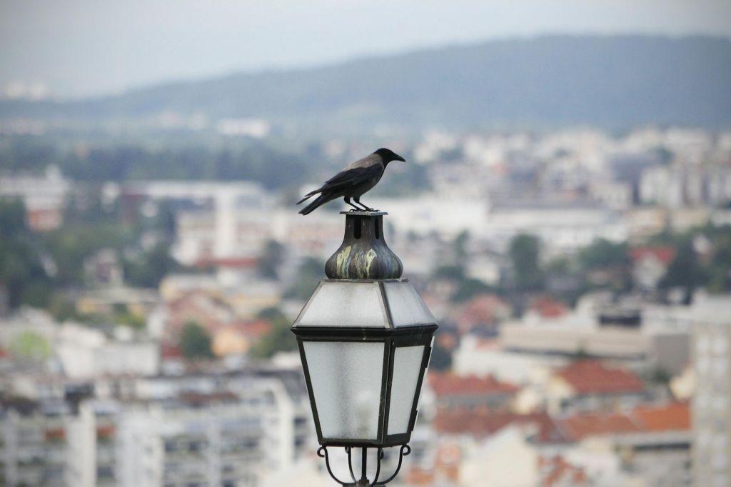 Kje so (bile) vrane?