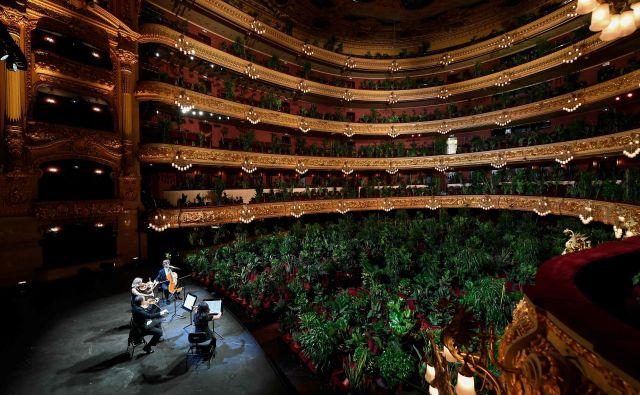 Kvartet Uceli je med koronavirusom odigral celotni koncert v Grand Teatru Liceu v Barceloni le rastlinam. FOTO: Lluis Gene/Afp