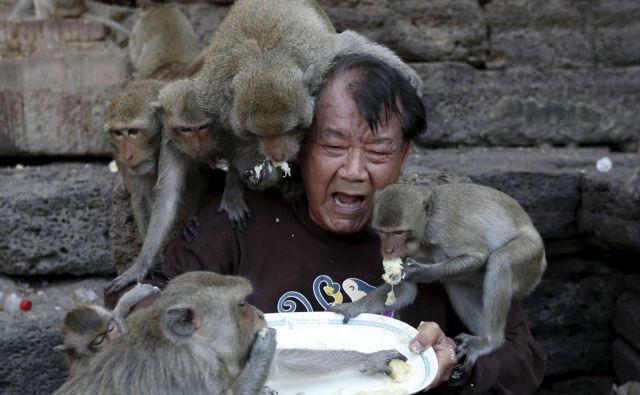 Opice so v zadnjih tednih postale zelo agresivne, še posebej, če vidijo človeka s hrano. FOTO: Jorge Silva/Reuters