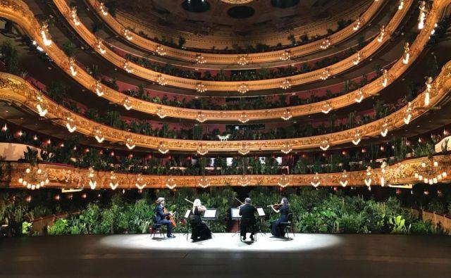 V operni hiši Gran Teatre del Liceu v Barceloni je godalni kvartet UceLi zaigral pred rastlinami, s katerimi so zapolnili 2292 sedežev. FOTO: arhiv Gran Teatre del Liceu