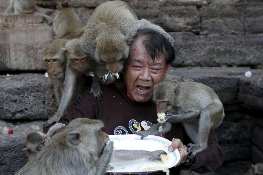 FOTO:Invazija opic