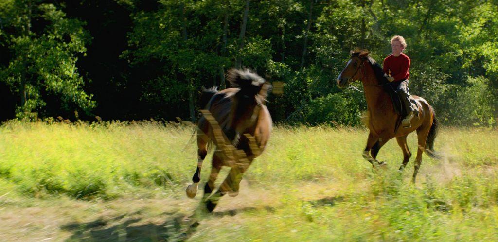 Ocenjujemo: Konje krast