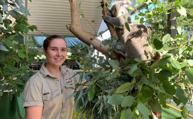 Koale živijo tudi v zveznih državah Viktorija, Queensland in Južna Avstralija.FOTO: Stefica Bikes/Reuters