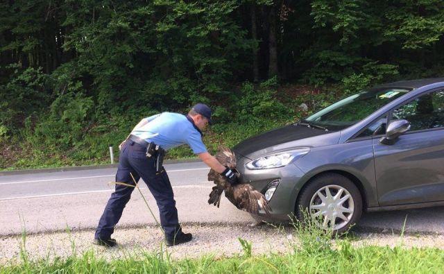 Čemu se je ford nemškega lastnika zdel slovenski ujedi tako zanimiv, da ga je hotela prestreči kar med vožnjo, ne bo nikoli znano. FOTO: PU Novo mesto/Facebook