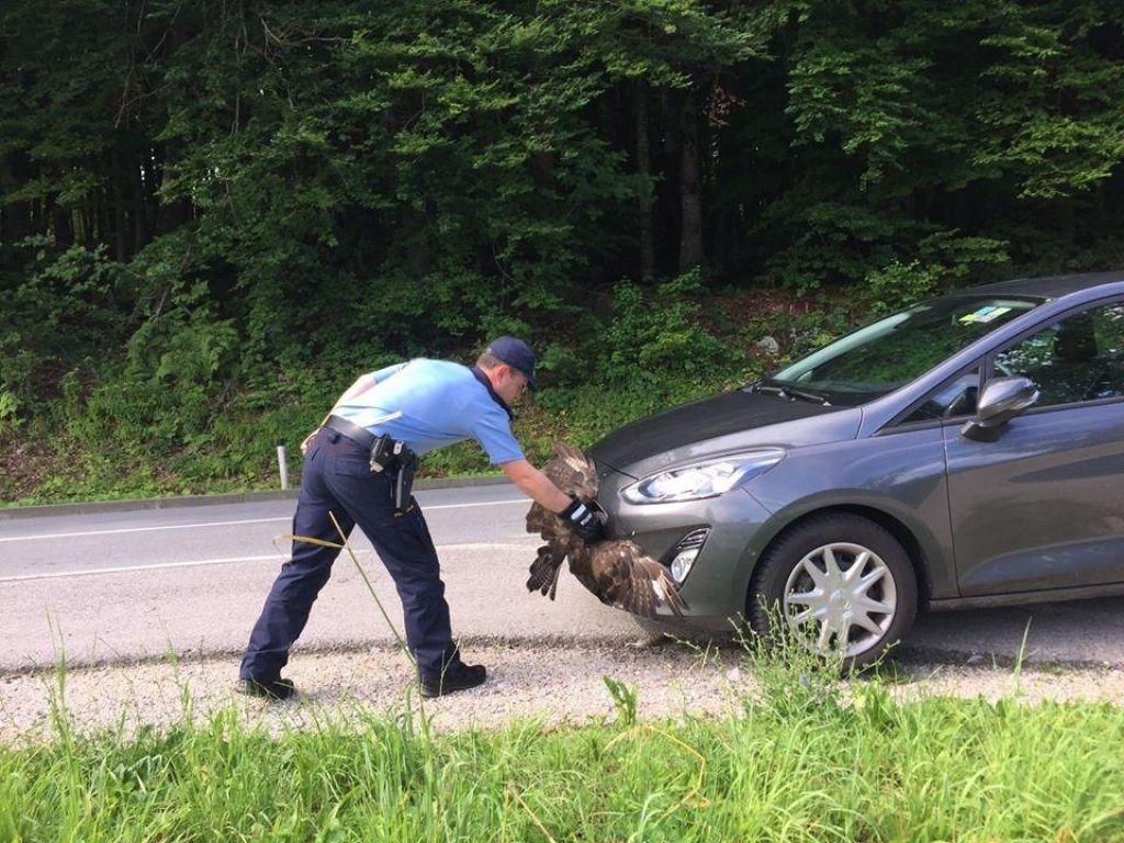 Na belokranjske policiste se lahko zanesejo tudi ujede