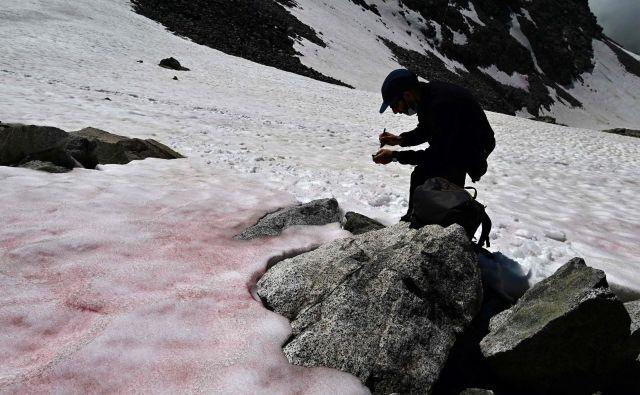 Raziskovalec Biagio di Maio jemlje vzorce snega na ledeniku Presena. FOTO: Miguel Medina/AFP