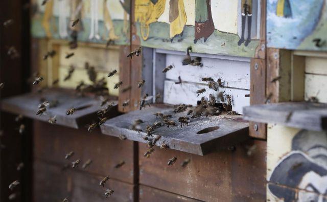 Prepoved uporabe teh pesticidov pri nas je pomore čebel prekinila. Foto Leon Vidic/Delo