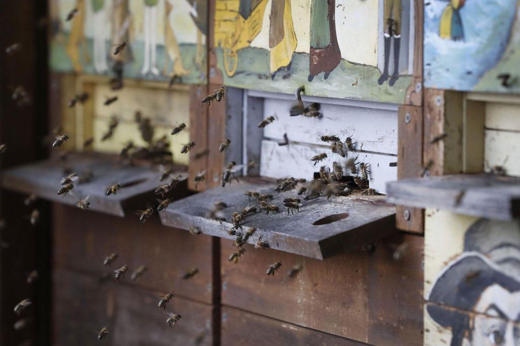 Prepoved je nujna zaradi naše čebele