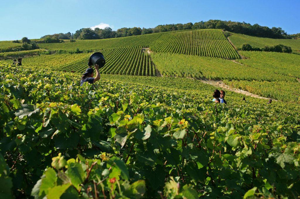 V vinu je resnica o podnebnih spremembah