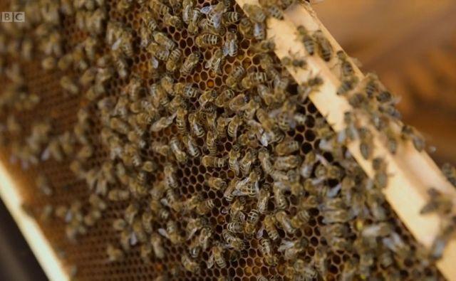 Čebelarstvo je bilo od nekdaj nepogrešljiv del slovenske kulture in identitete, toda v zadnjem času po vsej državi nastajajo posebni čebelnjaki – terapevtski čebelnjaki.<br /> Foto BBC Reel