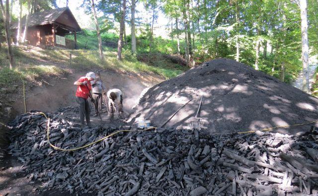 Razdiranje kope je nevarno, a najpomembnejše oglarsko opravilo. Foto Bojan Rajšek