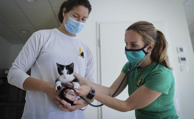 V zavetišču Gmajnice bodo po novem v posebnem izolatoriju lahko namestili tudi okužene zapuščene živali. Trenutno je tam pet mačk, okuženih z mačjo boleznijo. Foto Jože Suhadolnik