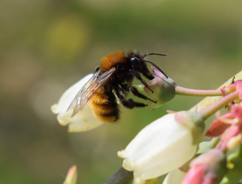 Ministrstvo zanika znižanje standardov varstva čebel