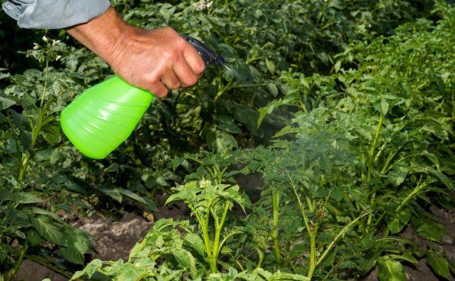 Strokovnjaki za vrtnarjenje njeno blago raztopino omenjajo kot preventivno škropivo proti pepelastim plesnim na vrtninah in okrasnih rastlinah ter proti kumarni, čebulni, kapusni, solatni in krompirjevi plesni, vendar opozarjajo, da ni čarobna paličica, ko so rastline že močno bolne. FOTO: Ostariyanov, Shutterstock