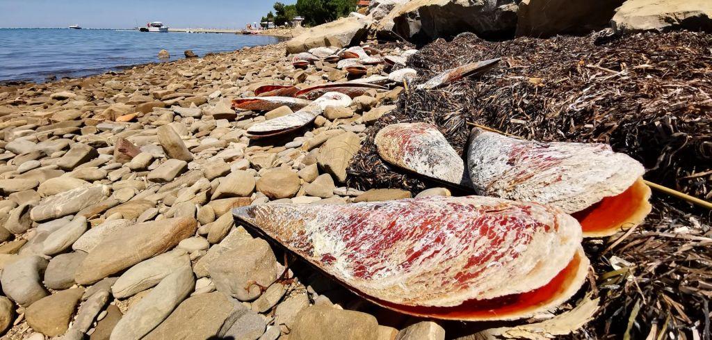 FOTO:Parazit grozi leščurjem v zadnji sredozemski oazi