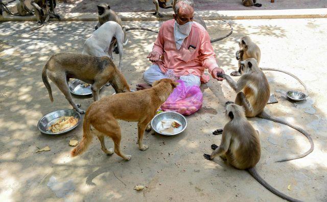 Skrbnik templja Bhekhaddhari Goga Maharaj v Ahmedabadu hrani potepuške pse in opice. FOTO: Sam Panthaky/AFP<br />