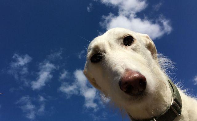 Lurcherji so že na videz zelo zabavni psi. FOTO: Tskirkup/Shutterstock