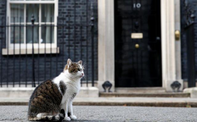 Maček Larry na Downing Streetu živi že deseto leto. Foto: REUTERS/Henry Nicholls
