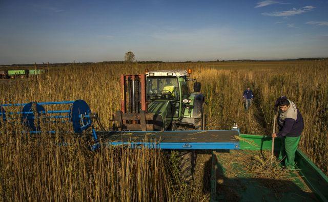 Sosednje države nas prehitevajo na vseh ravneh, ugotavljajo pridelovalci pri nas. FOTO: Voranc Vogel/Delo