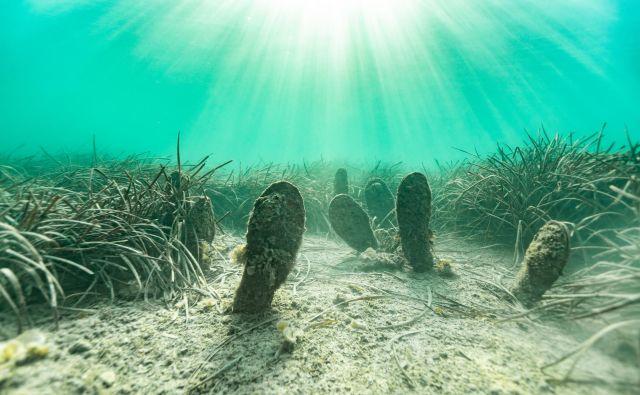 Morje v Žusterni je še bistro in ima še leščurje. FOTO: Uroš Kekuš Kleva/Delo