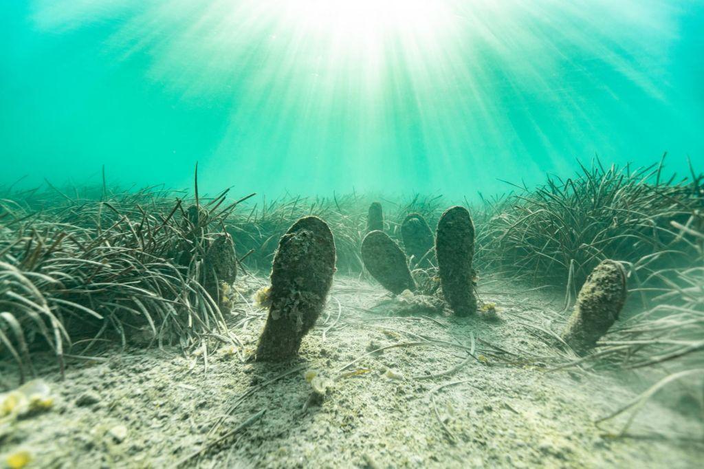 FOTO:Bistro morje veseli kopalce, leščurjev pa ne
