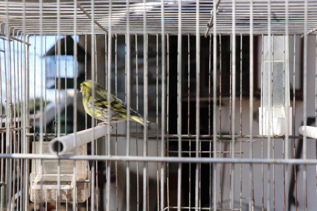 FOTO:V Sloveniji letno nezakonito ulovljenih ali ubitih najmanj 14.000 ptic