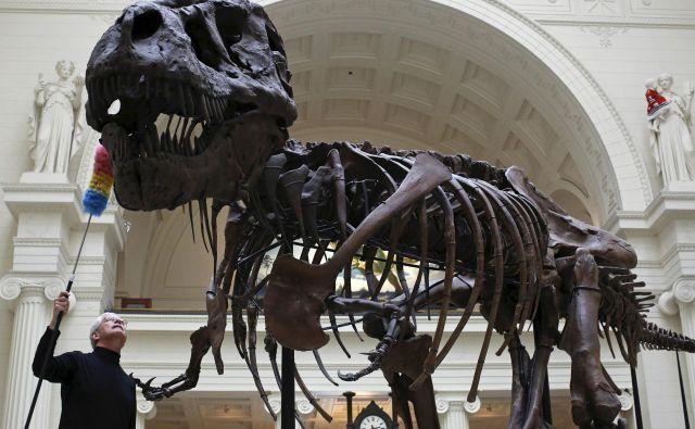 Fotografija prikazuje skelet tiranozavra iz The Field Museuma v Chicagu. FOTO: Jim Young/Reuters