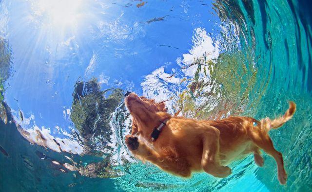 Vročinskim kapem zaradi pretirane fizične aktivnosti so bolj izpostavljeni samci in mlajši psi. FOTO: Denis Moskvinov/Shutterstock
