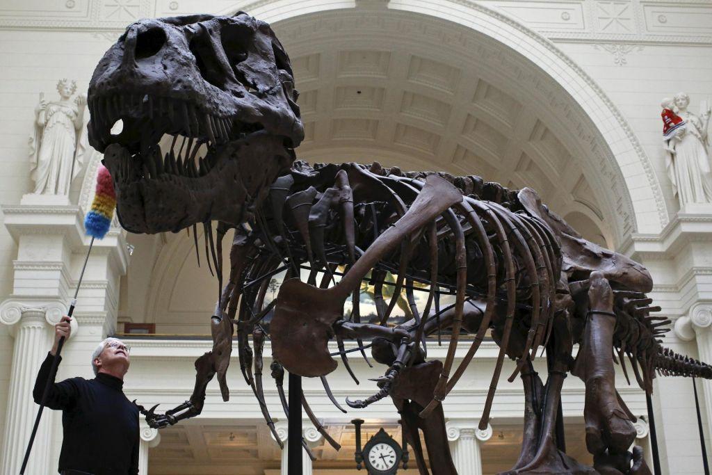 V Veliki Britaniji odkrili novo vrsto dinozavra, sorodnika tiranozavra