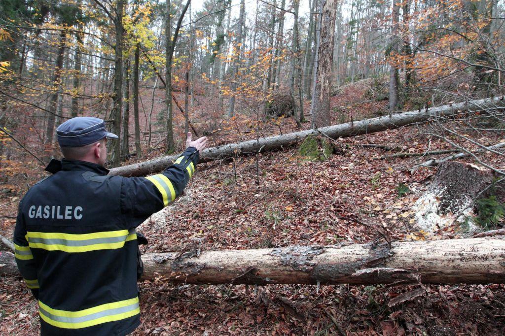 Gozdni delavec se je smrtno ponesrečil