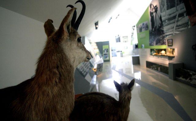Muzej je v kratkem času uspel najti svoje mesto v slovenski muzealni krajini in skrbi za ohranjanje kulturne dediščine, tradicije alpinizma in gorništva na Slovenskem pa tudi za vzgojo o varovanju narave. FOTO: Roman Šipič