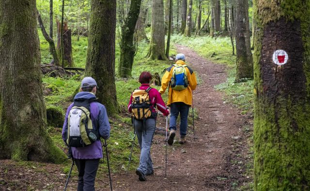 Steze, po katerih poteka arheološka pot, se vijejo po mešanem gozdu. Foto Marko Pršina