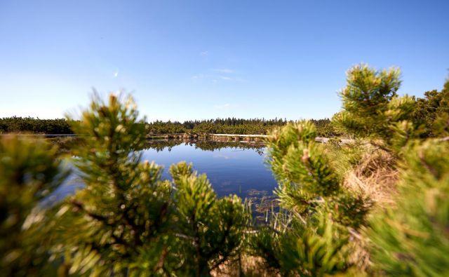 Lovrenška jezera na Rogli FOTO: Unitur