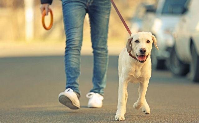 Nemški lastniki psov bodo v kratkem primorani svoje štirinožce voditi na sprehod vsaj za dve uri na dan. Foto Africa Studio/Shutterstock