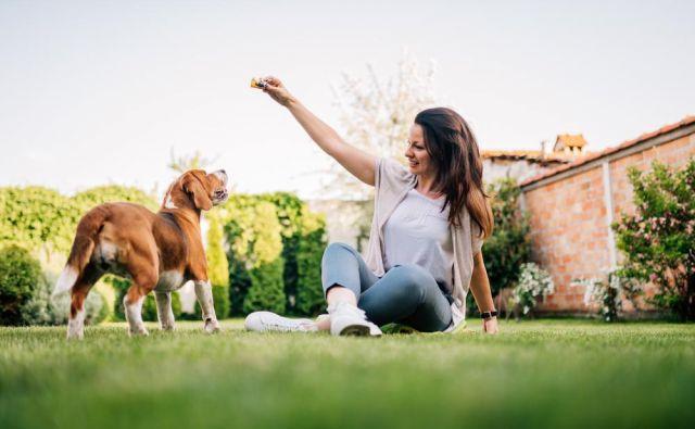 Nekateri psi prepoznajo več tisoč imen in predmetov, hkrati pa znajo poimenovanja povezati s predmeti. Foto Branislav Nenin/shutterstock