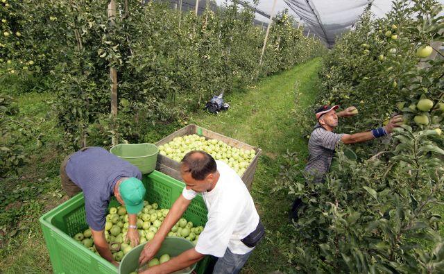Podjetja bodo od konca avgusta potrebovala od 500 do 580 sezonskih delavcev. FOTO: Matej Družnik